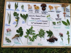 Foraged foods from Galloway